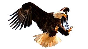 Eagle%2520picture_edited_edited.png