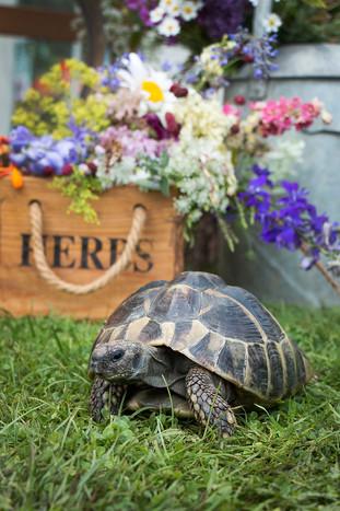 Wedding florals and garden tortoise