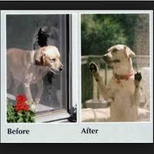 pet screen repair