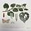 Thumbnail: Pounamu Kawakawa Leaf