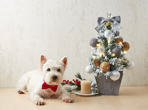 Westie Celebrate Scandinavian Christmas on light wood background