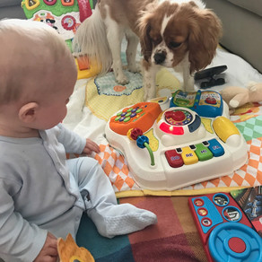 Dogs and Babies Are The Best