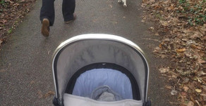 I'm Sick Of Rolling Over Dog Poop With The Pram!