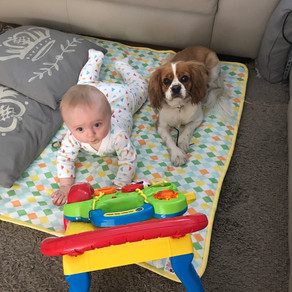 How To Introduce Your New Baby To The Dog