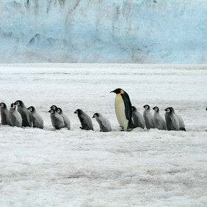 Dynasties Penguins - Sometimes You Have To Break The Rules To Do The Right Thing