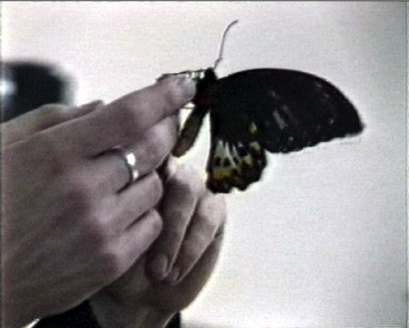 VZ / Pastor with butterflies