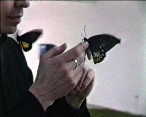 VZ / Pastor with butterflies