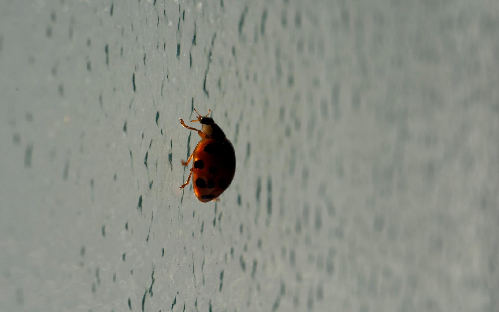 A ladybug flew in the bathroom | London, March 2020.