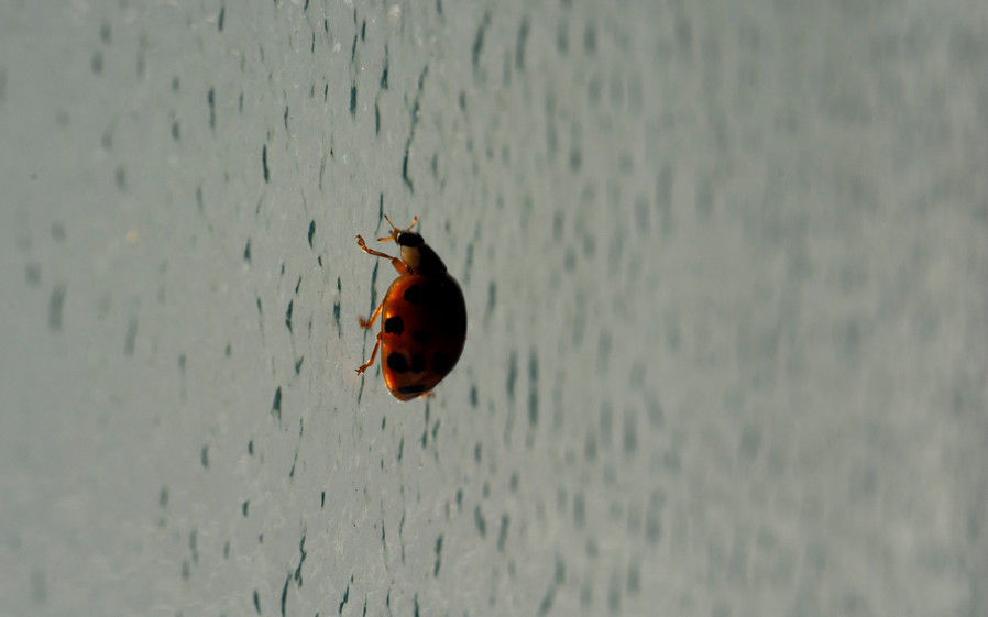 A ladybug flew in the bathroom | London, March 2020.