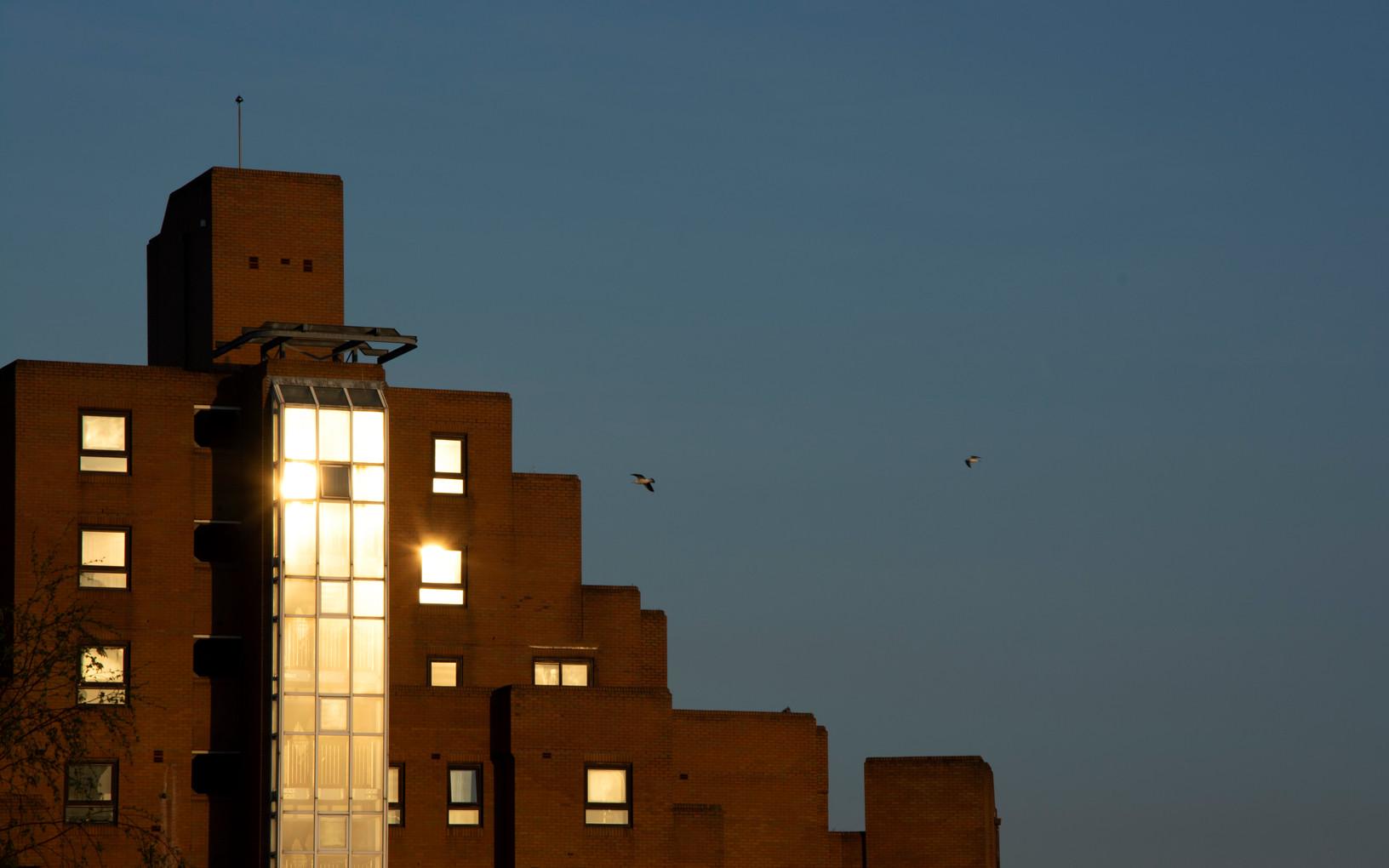 Sunset with seagulls | London, April 2020.