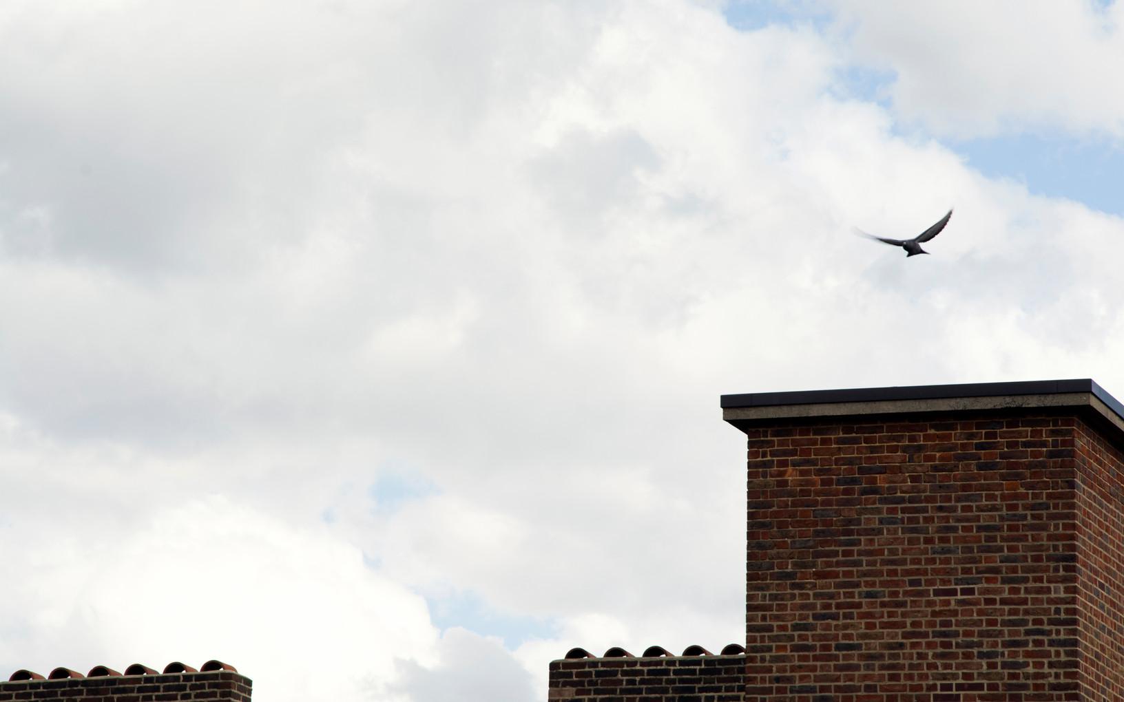 Pidgeon taking off | London, April 2020..