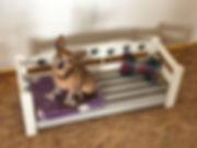 hund4.jpg