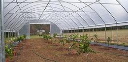 High Tunnel Interior Fruit Trees Web.JPG