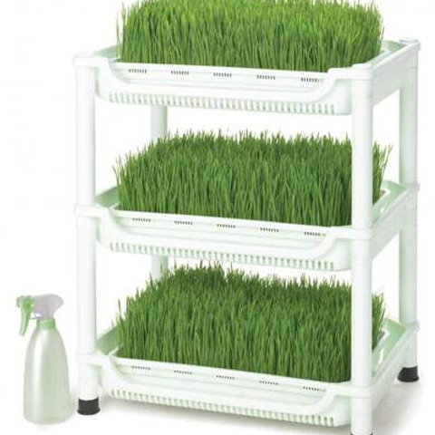 Sproutman's Multi-Level Wheatgrass Grower