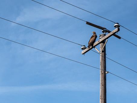 Preparing the Grid for Renewables: Electric Serviceways