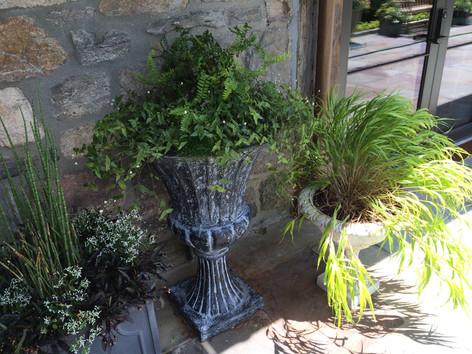 Planting & Transplanting