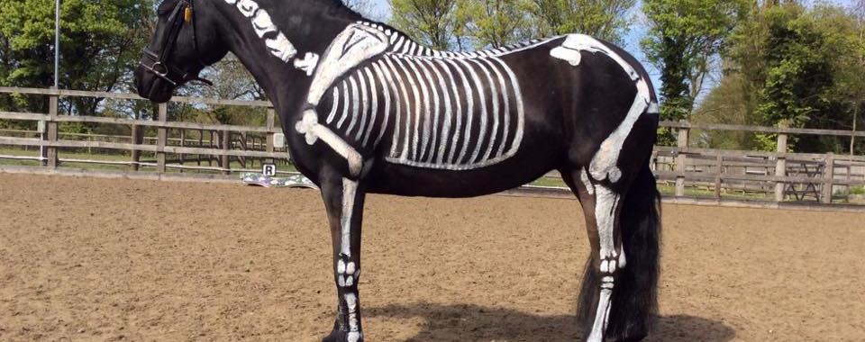carrie skeletal anatomy.jpg
