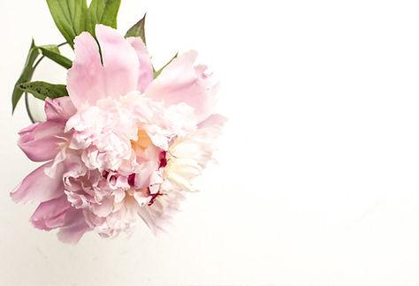 flower_web.jpg