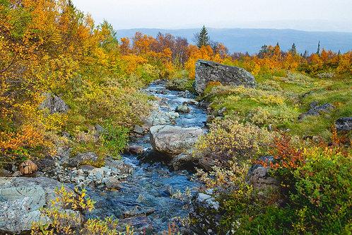 Høstfarger i landskapet