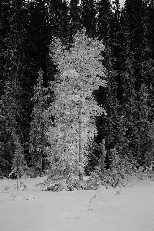 Hvitt og svart landskap #2