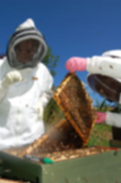 ABKA beekeeping training