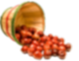 Iggy's Apple Barrel