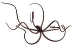 giant_octopus