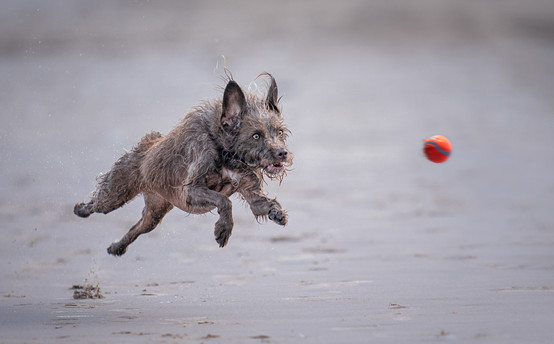 COLOUR: 'Wolf Dog' by Jennifer Willis - Catchlight Camera Club