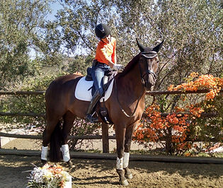 Terri Sue Wensinger being coached by ashley donadt dressage in rancho santa fe on the horse san souci wearing orange and samshield helmet