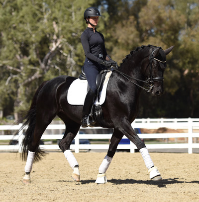 cool diamante dante and ashey donadt dressage trotting in a sales photo, extended trot, white polo wraps, black gelding horse