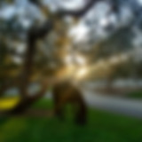 IMG_20181208_161130288_HDR.jpg