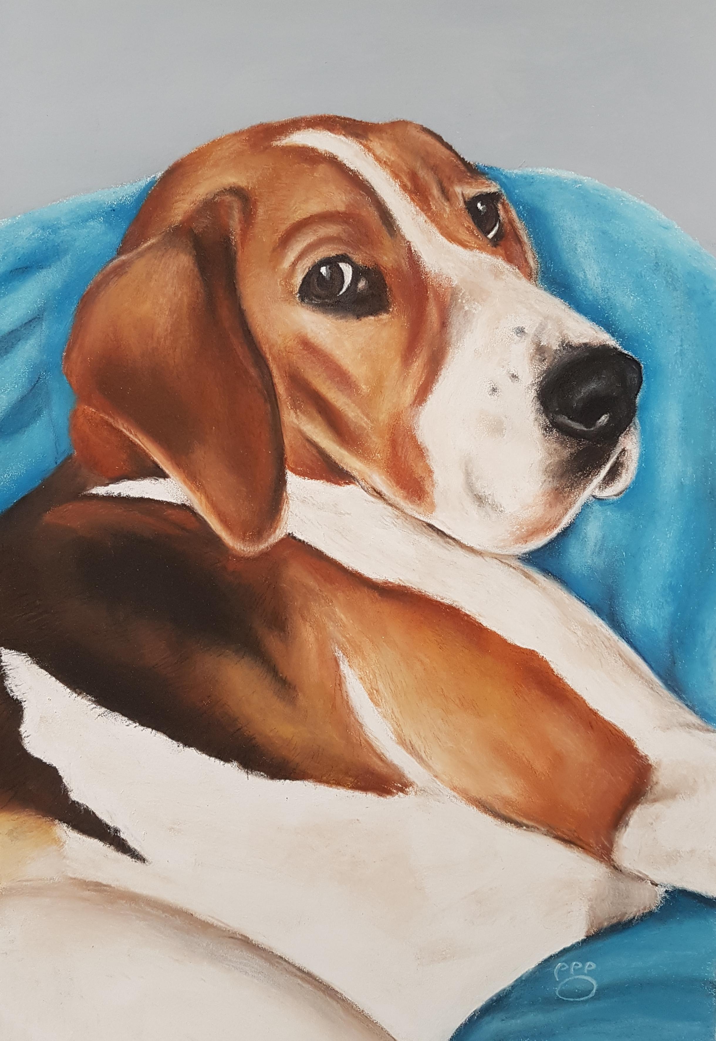 Conan A3 Beagle