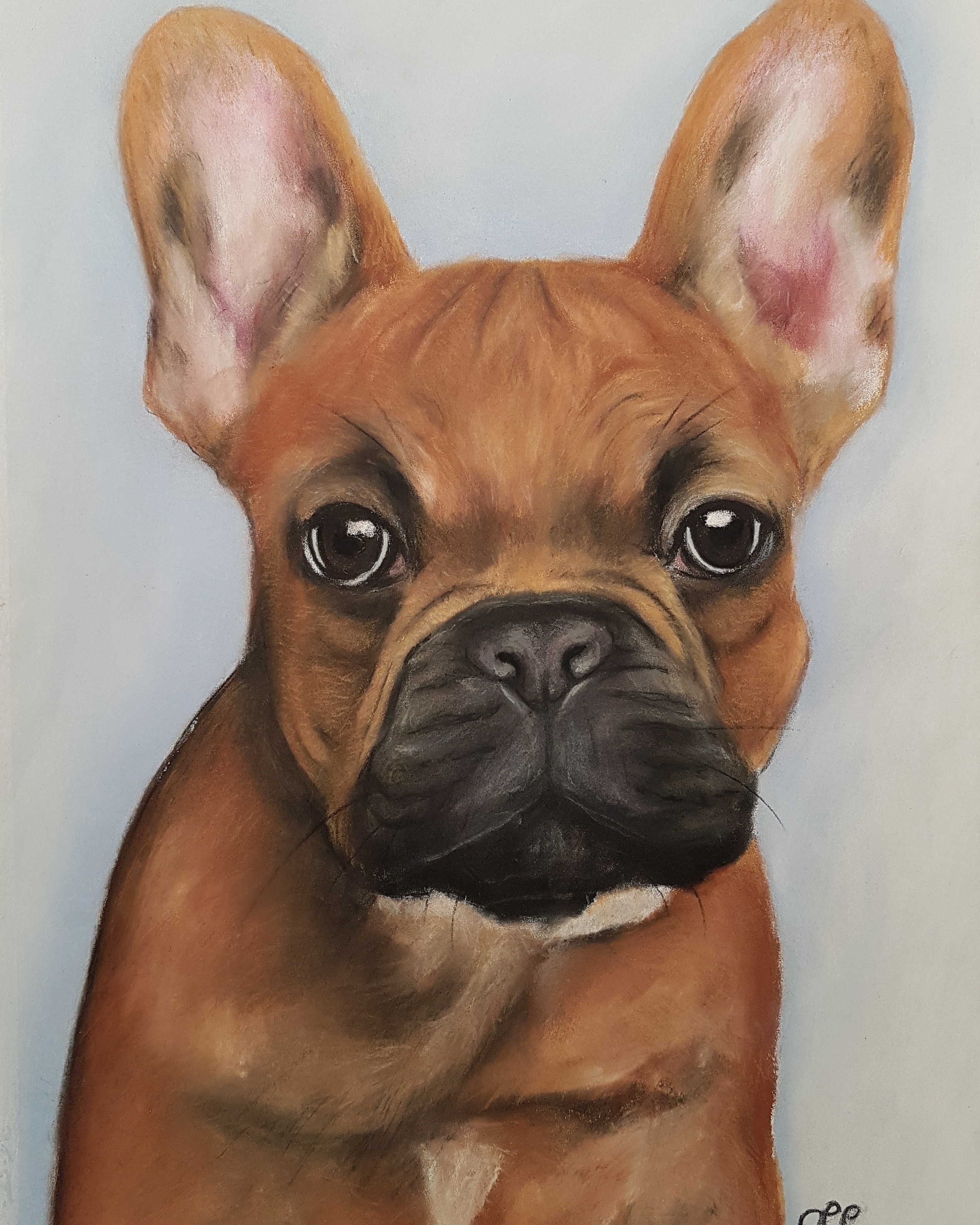 French Bulldog A3