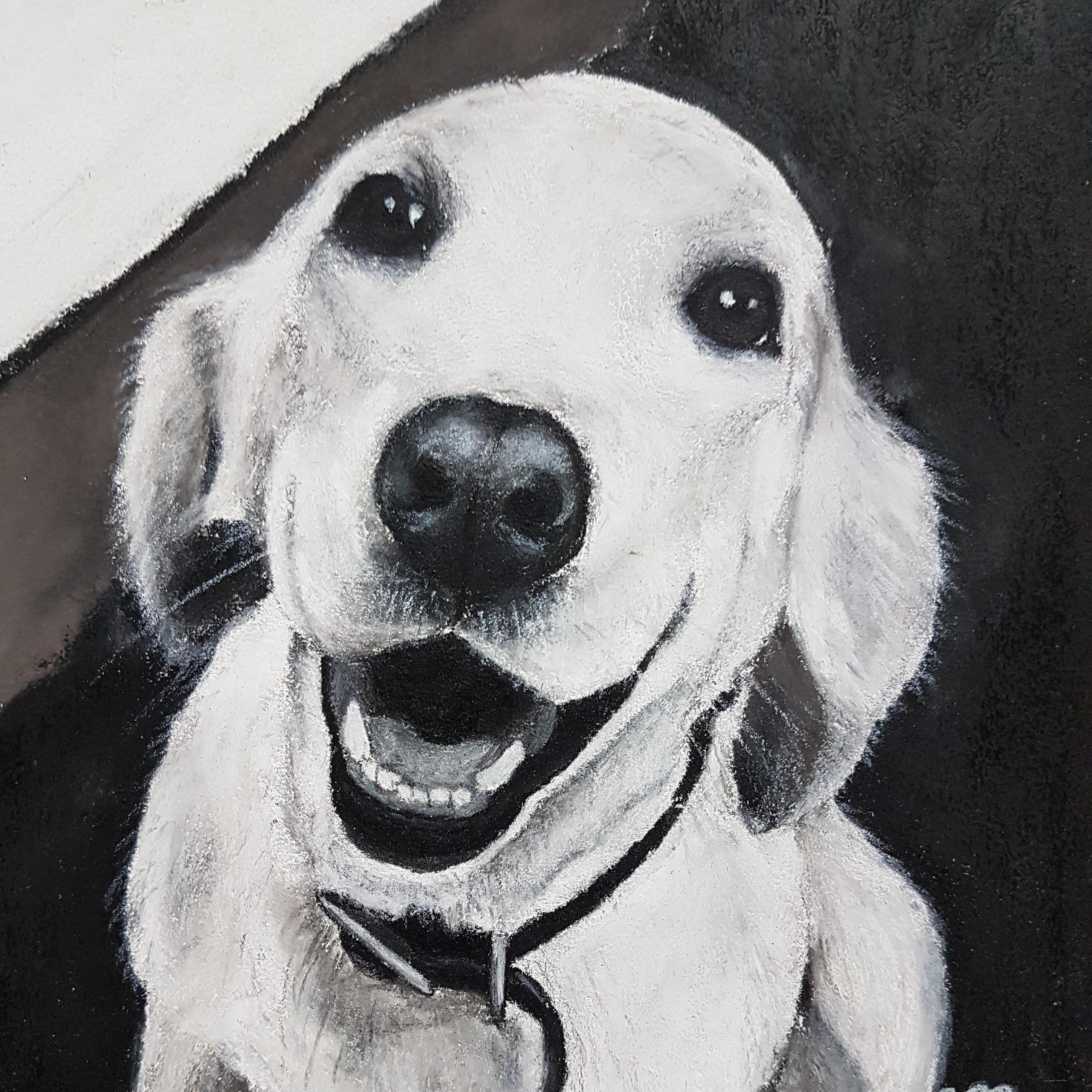 Millie A5 Labrador