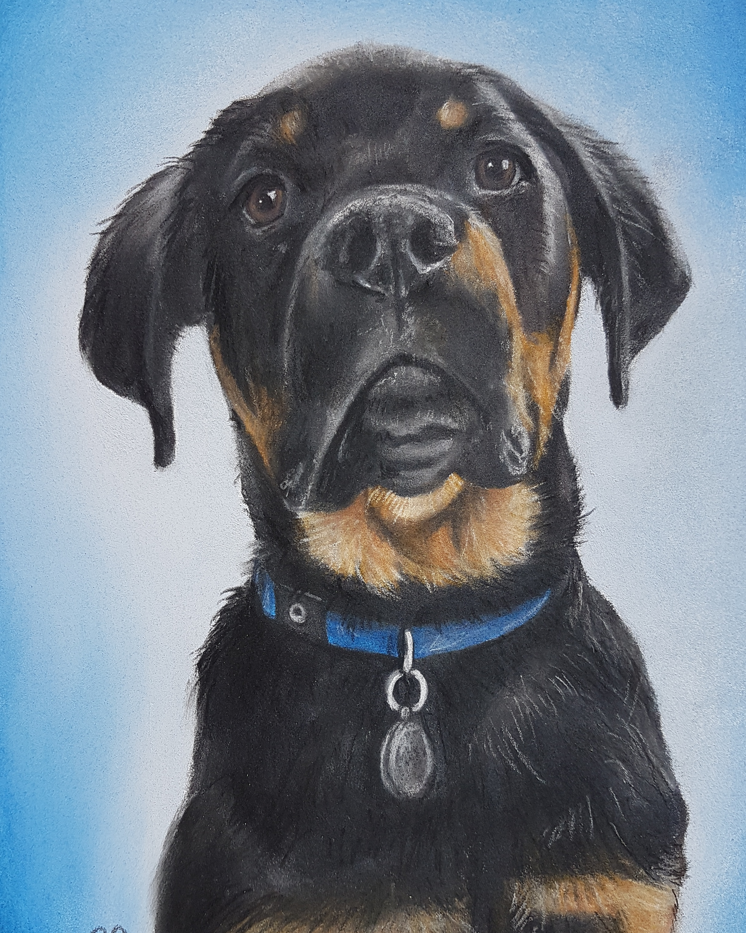 Lupo A5 Rottweiler