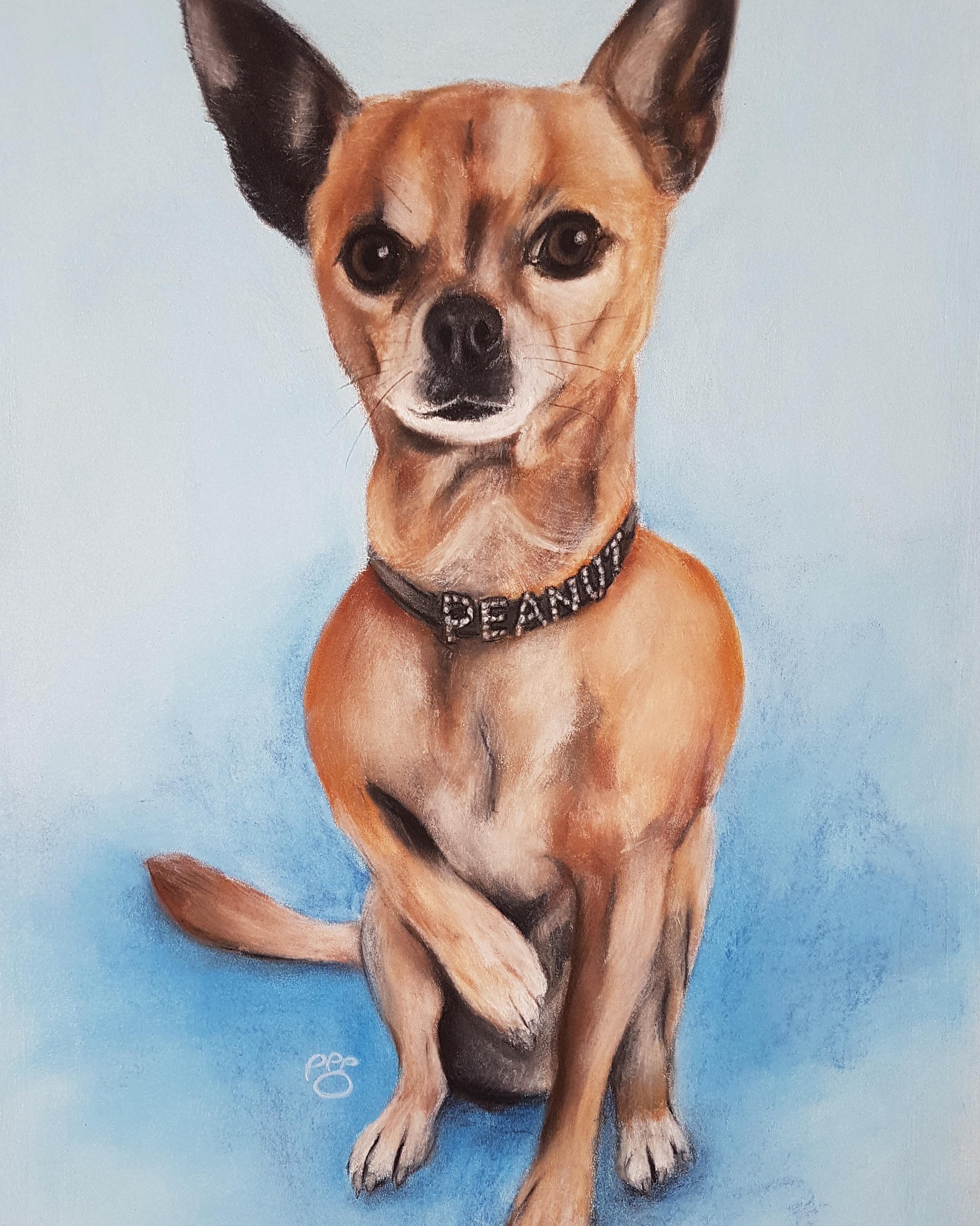 Peanut A3 Chihuahua