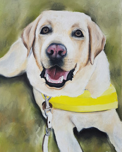 Tom the Guide Dog A3