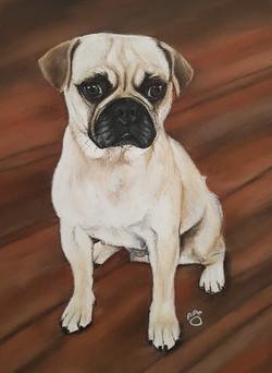 Reggie A4 Pug