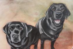 Chilli and Freddy A3 Labrador