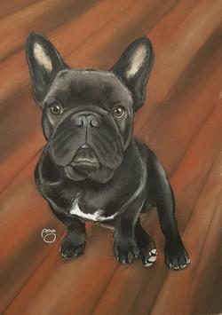 Ruby A4 French Bulldog