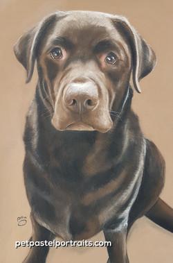 Samson A3 Labrador