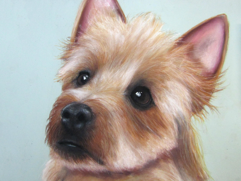 Australian Terrier A3