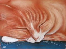 puss sleeping