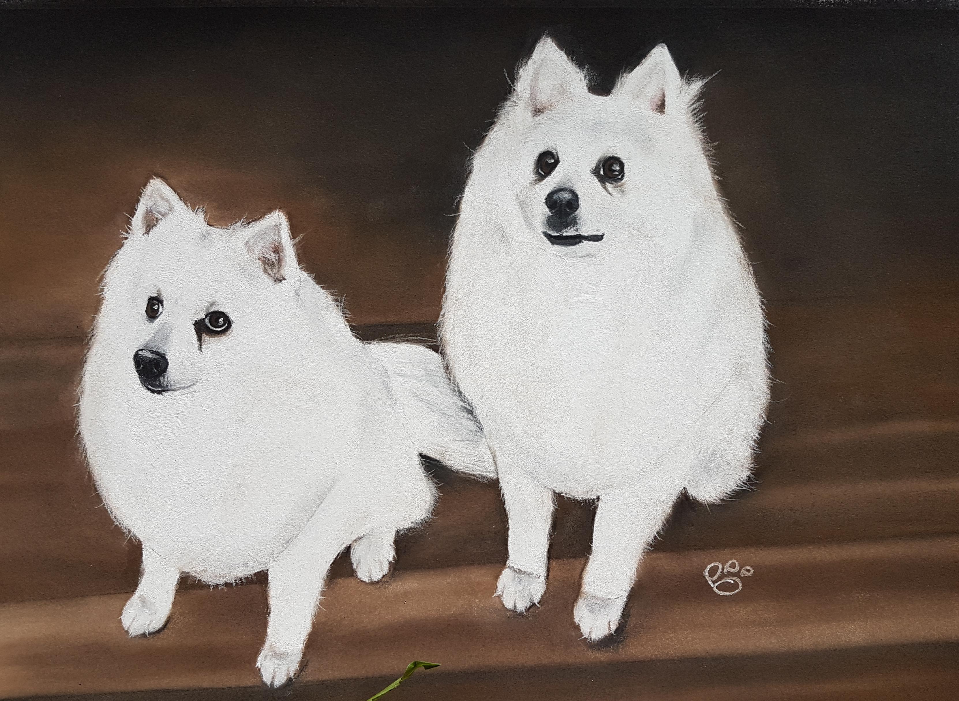 Sarda and Kenny A3 Pomeranian