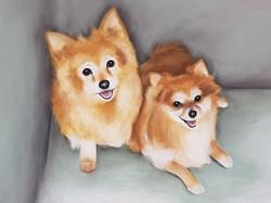 Jasper and Billy A2 P{omeranian