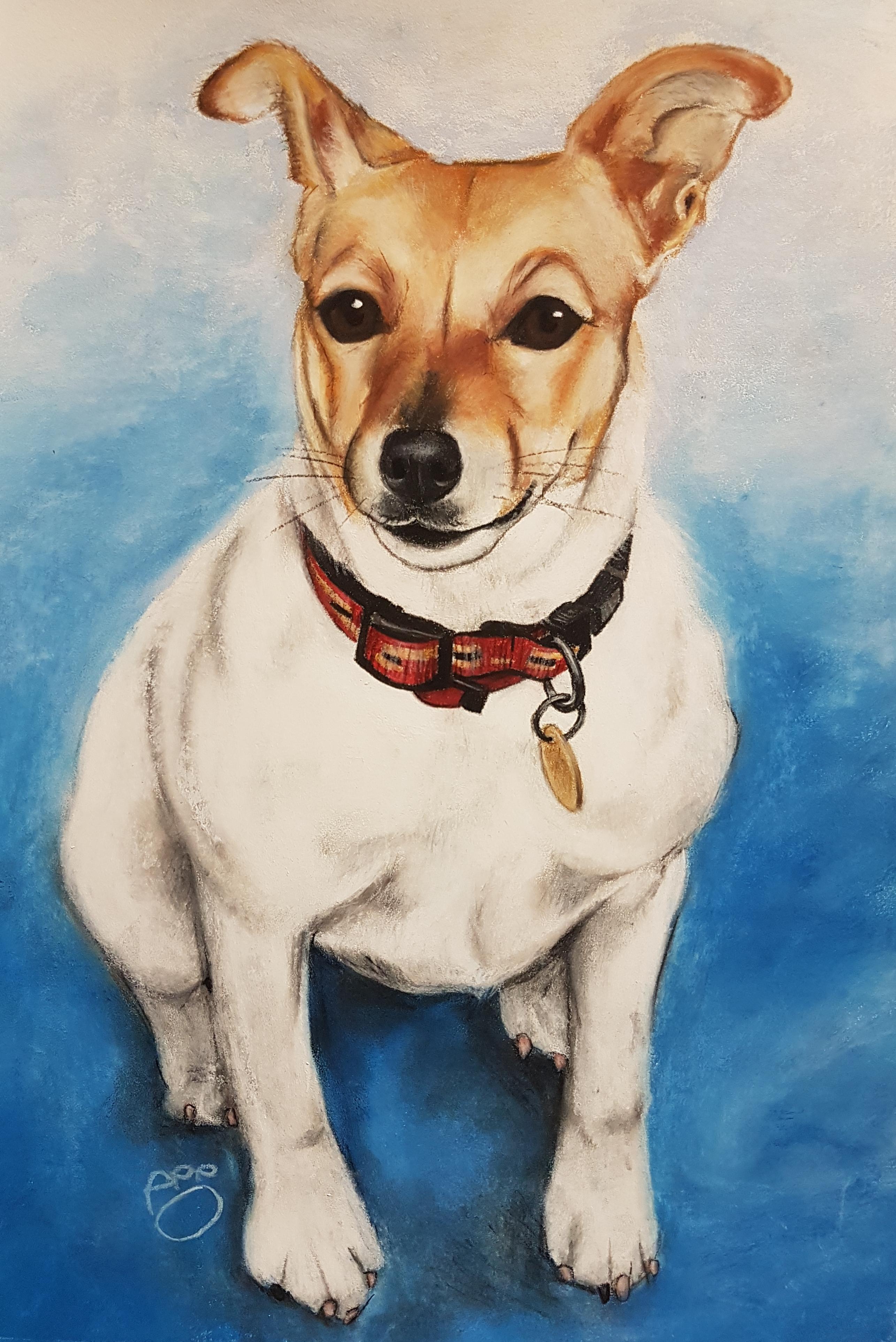 Geordie A3 Jack Russell Terrier