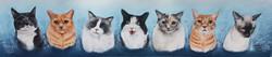 7 cats Custom sized