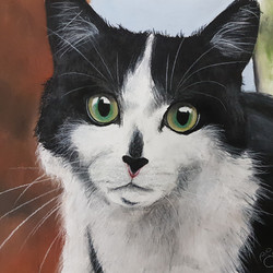 Black and White Cat A3