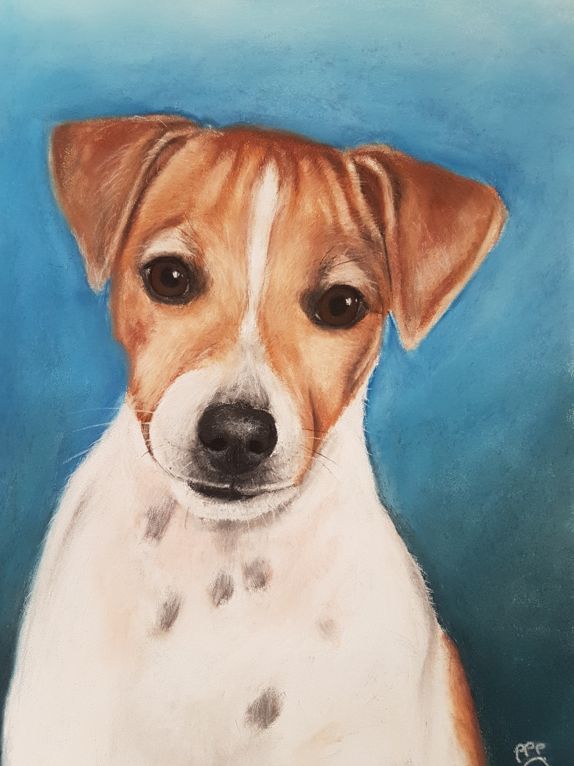 Toby A4 Jack Russell Terrier