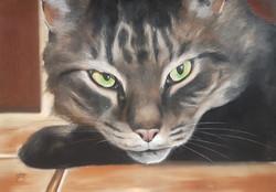 Tiger A3 Tabby Cat